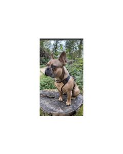 Carolina Corrodi Geschirr French Bulldog, Toronto Beige