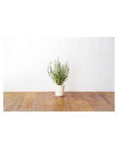 Click and Grow Saatgut Thymian